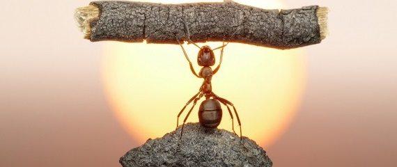 Karınca Mini Robot1