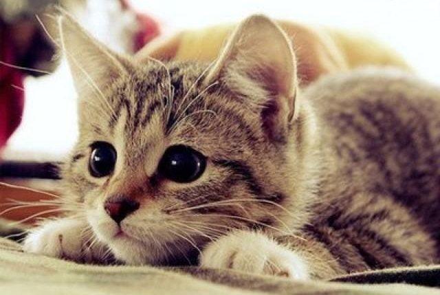 Kedi2