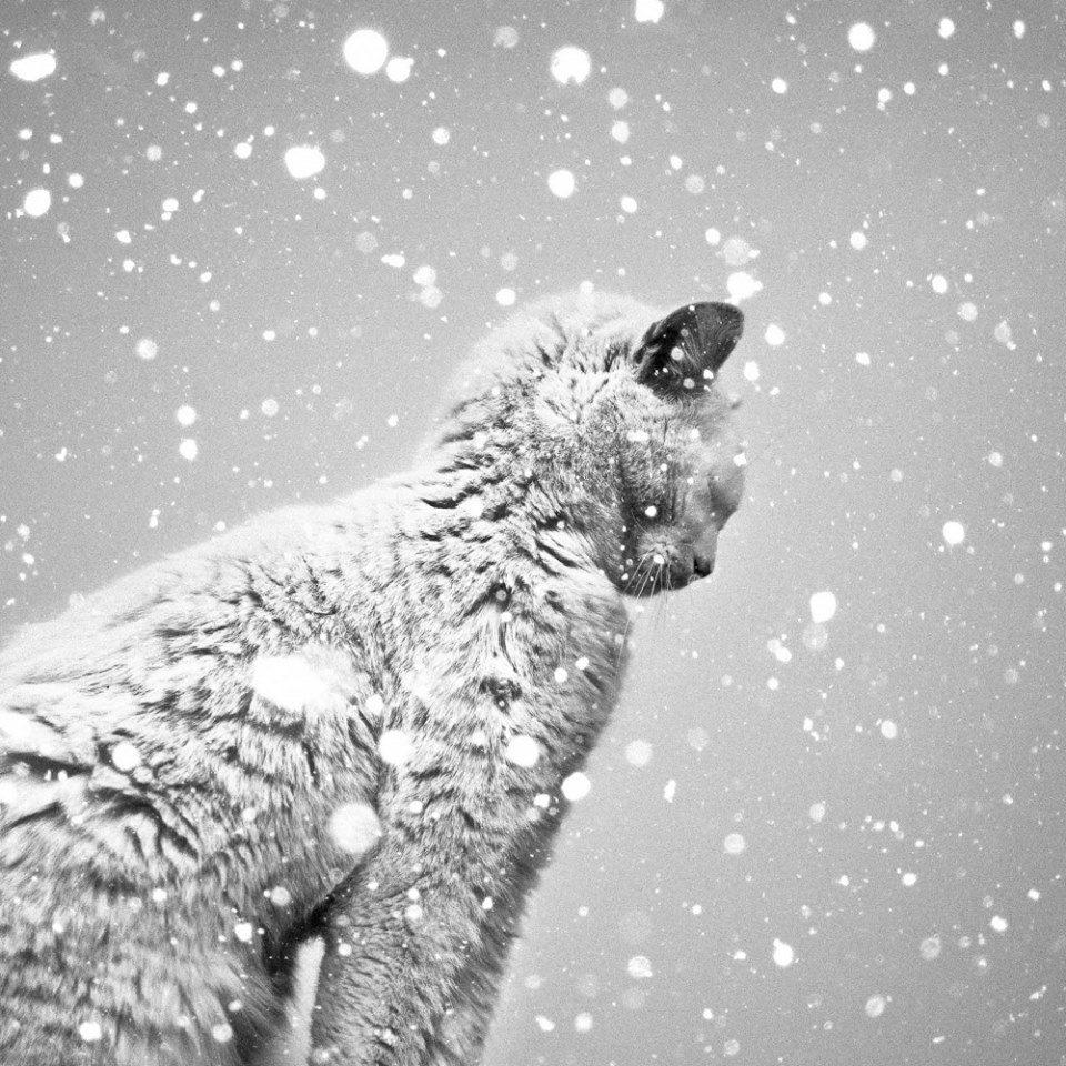 Le Chat Sous La Neige ©Benoit Courti