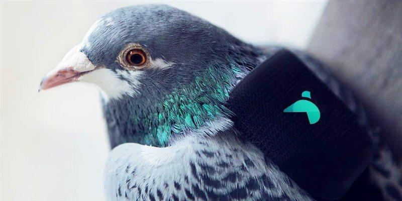 Güvercin1