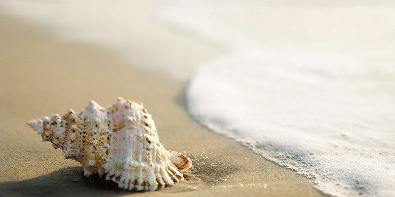 deniz-kabuklari3