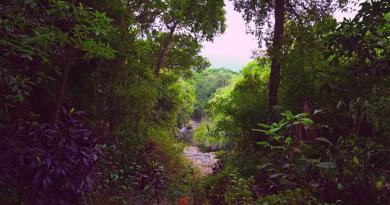 Onlarca Yıllık Emekle Canlandırılan Yağmur Ormanı